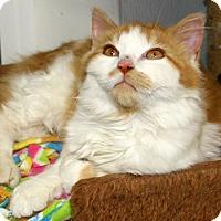 Adopt A Pet :: Goldie - Republic, WA