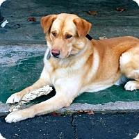 Adopt A Pet :: Jack - Ridgefield, CT