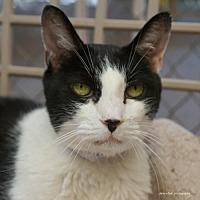 Adopt A Pet :: Wily - Tucson, AZ