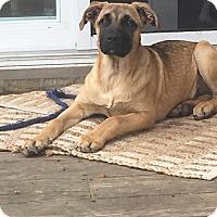 Adopt A Pet :: Drago - Hainesville, IL