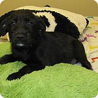 Adopt A Pet :: Hogan - Groton, MA