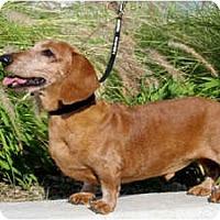 Adopt A Pet :: Edward - San Jose, CA