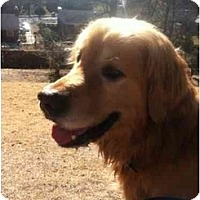 Adopt A Pet :: Raymond - Alexandria, VA