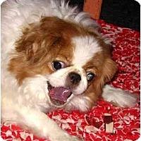 Adopt A Pet :: Kelli-PA - Emmaus, PA