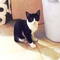 Adopt A Pet :: Carrie Ann - Catasauqua, PA