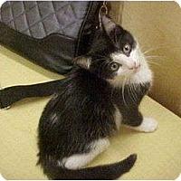 Adopt A Pet :: Kate - Jenkintown, PA