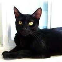 Adopt A Pet :: Dahlia - Shelton, WA