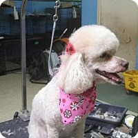 Adopt A Pet :: Mimi - Garwood, NJ