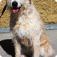 Adopt A Pet :: Daisy - Gilbert, AZ