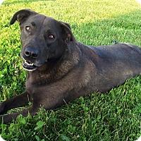 Adopt A Pet :: Daisy - Russellville, KY