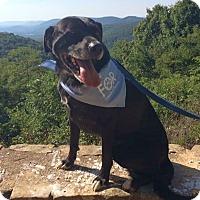 Adopt A Pet :: JoJo - Knoxville, TN