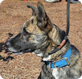 Shepherd (Unknown Type) Mix Dog for adoption in Yreka, California - Zeb