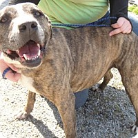 Adopt A Pet :: NayNay - Ridgeland, SC