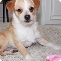 Adopt A Pet :: *Scooter* - Pleasanton, CA