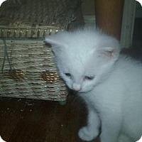 Adopt A Pet :: Susan - ROSENBERG, TX