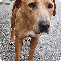 Adopt A Pet :: Chelsea - Newport, NC