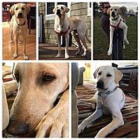 Adopt A Pet :: Toby - Harmony, Glocester, RI
