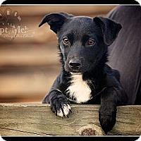 Adopt A Pet :: Annie - Albany, NY