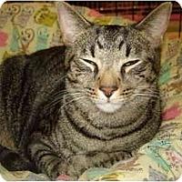 Adopt A Pet :: Brooklyn-F & New York-M - Chesapeake, VA