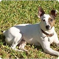 Adopt A Pet :: Floyd - Miami, FL