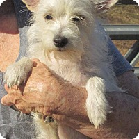 Adopt A Pet :: Little Bit - Wilmington, DE