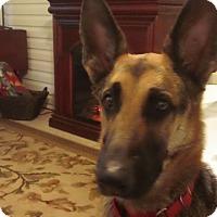 Adopt A Pet :: Ellie - Green Cove Springs, FL