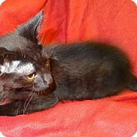 Adopt A Pet :: Freeway - Bentonville, AR