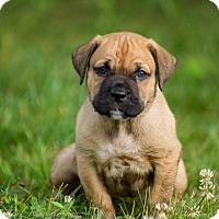Adopt A Pet :: Crystal(Yellow) - Virginia Beach, VA
