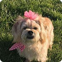 Adopt A Pet :: Precious - LEXINGTON, KY