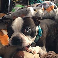 Adopt A Pet :: Skye - Weatherford, TX