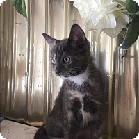 Adopt A Pet :: Poppy - Mission Viejo, CA