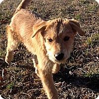 Adopt A Pet :: BUTTERCUP - Sardis, TN