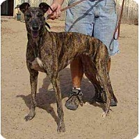 Adopt A Pet :: Desi (Deputy Dust) - Chagrin Falls, OH