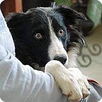 Adopt A Pet :: Scotty - Glenrock, WY