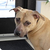 Adopt A Pet :: Georgia - Port Washington, NY