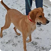 Adopt A Pet :: Cece - East Smithfield, PA