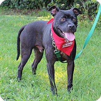 Terrier (Unknown Type, Medium) Mix Dog for adoption in McCormick, South Carolina - Urban