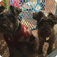 Adopt A Pet :: Sasha and King~~ADOPT PENDING - Sharonville, OH