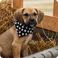 Adopt A Pet :: Turchetti - Aurora, CO