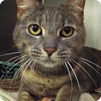 Adopt A Pet :: Birdie - Grants Pass, OR