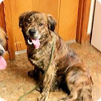 Adopt A Pet :: Paco - Naugatuck, CT