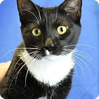 Adopt A Pet :: Seraph - Winston-Salem, NC