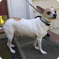 Adopt A Pet :: Rex - Lawrenceville, GA