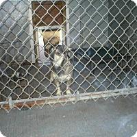 Adopt A Pet :: 0960 Panda - Jacksonville, FL