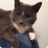 Adopt A Pet :: Puddin' - Merrifield, VA