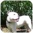 Photo 3 - Boxer/English Bulldog Mix Dog for adoption in Thomasville, Georgia - Georgia