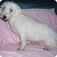 Adopt A Pet :: Reine - Homer, NY