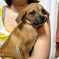 Adopt A Pet :: Nico - South Jersey, NJ