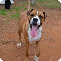 Adopt A Pet :: Baxter - Athens, GA