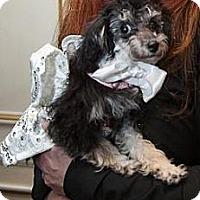 Adopt A Pet :: Megan - New York, NY